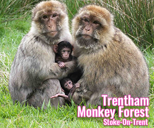 Trentham-Monkey-Forest-Day-Out-Discount