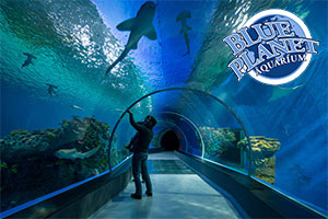 Dive into Blue Planet Aquarium this half term